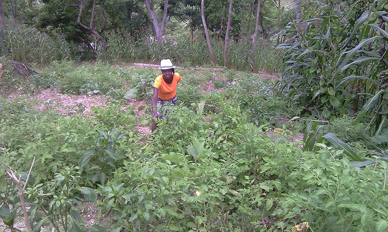 Haiti-Gardening_gardening-project