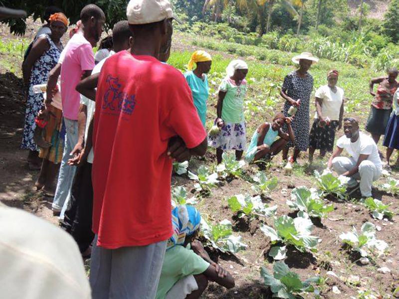 Haiti-Gardening_teaching-agriculture